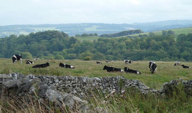 Overlooking Lathkill Dale