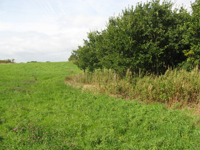 The Southern Boundary of Oak Wood