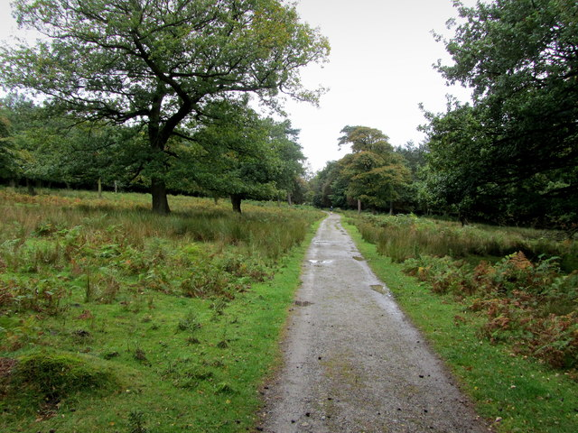 Track in Longshaw Country Park