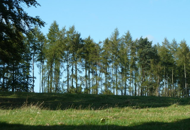 Line of trees above Edensor