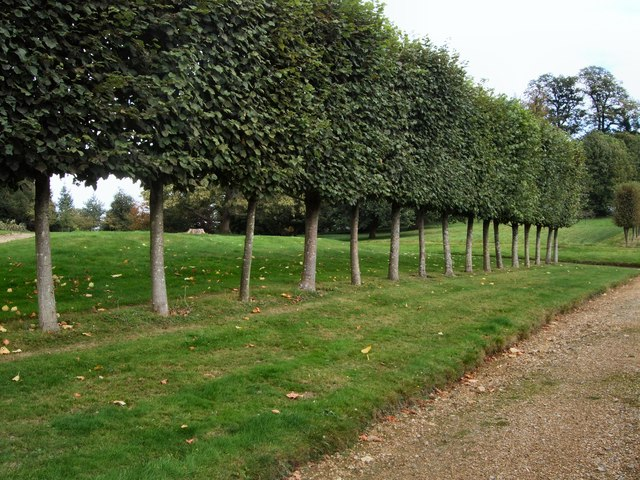 Row of trees - Squerryes Court