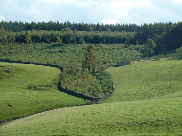 Parkland and woodland in the Chatsworth estate