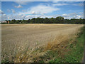 TL4749 : Harvested field - Sawston by Logomachy