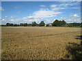 TL4748 : Harvested field - Whittlesford by Logomachy