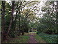 TQ3574 : Woodland path in Brenchley Gardens by David Anstiss