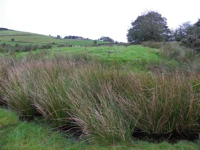 Rushy ground, Mulnafye