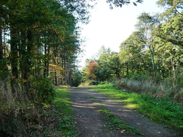 Track through Cawthorne Park Wood