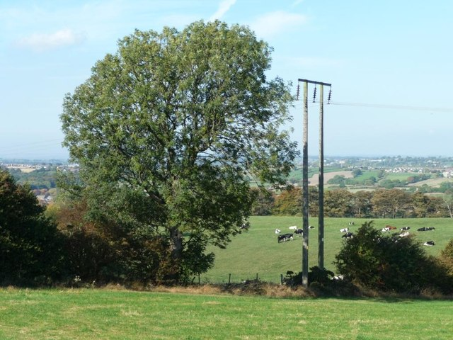 Tree and telegraph pole in the hedgerow