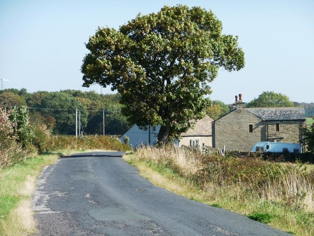 Roadside tree near Sike House, Denby Lane