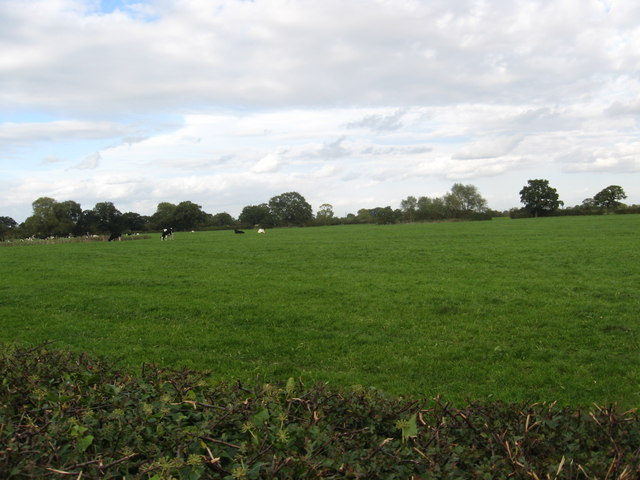 Cattle grazing peacefully at Brownhayes