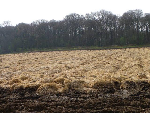 Covered vegetables near Stormont
