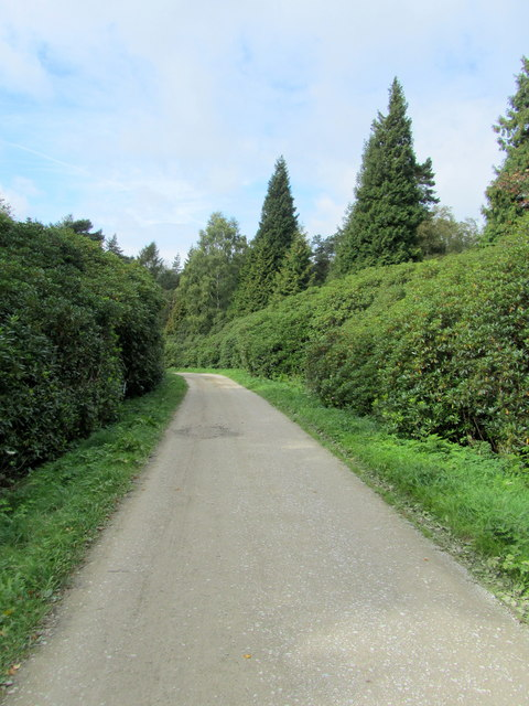 Woodland Track in Chatsworth Park