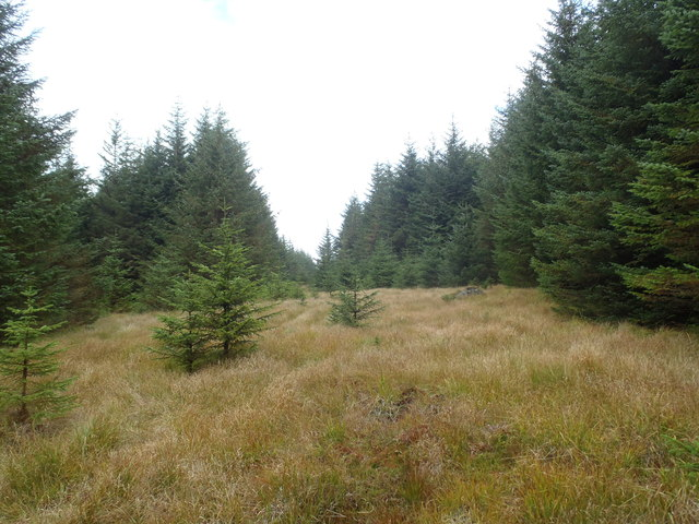 Forest clearing near Low Craigeazle