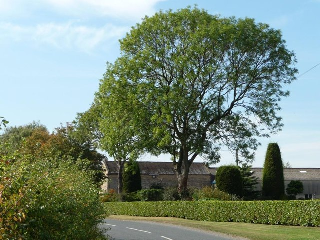 Large tree in the garden of Moorhouse Grange