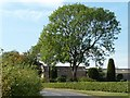 SE4810 : Large tree in the garden of Moorhouse Grange by Christine Johnstone