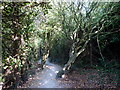 TR2068 : Footpath at Bishopstone Glen by pam fray
