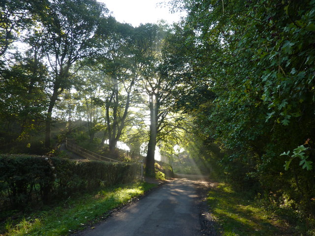 Sun shining through trees, Coombs Road, Bakewell