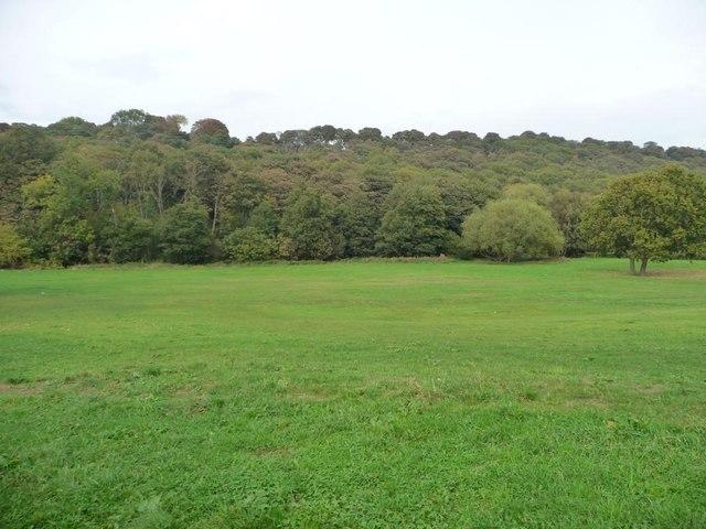 The edge of Walker Wood