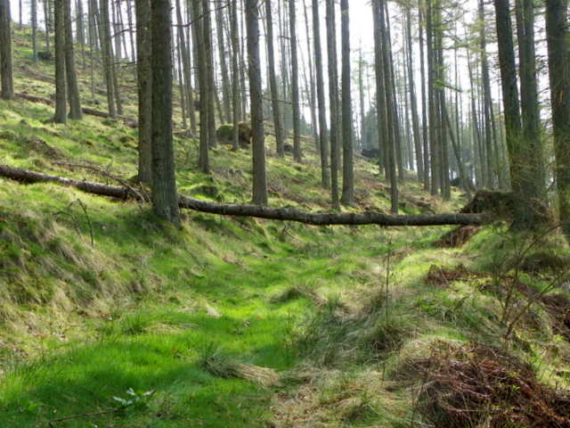 Woodland track near Bamff