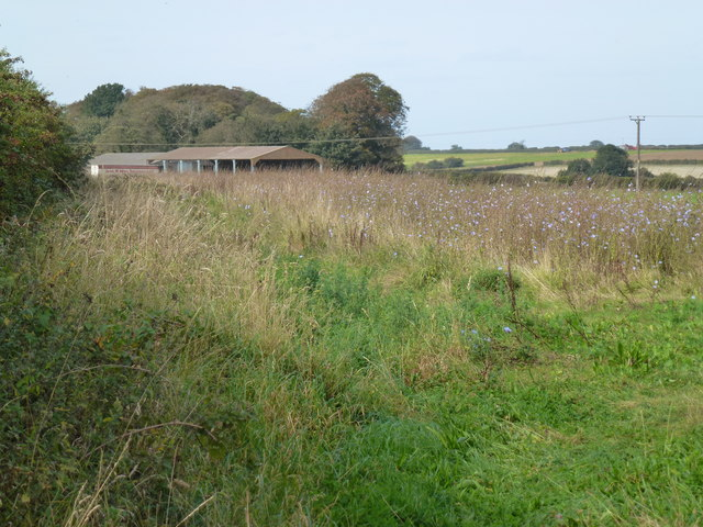 Naturalised farm land near Red Barn Farm