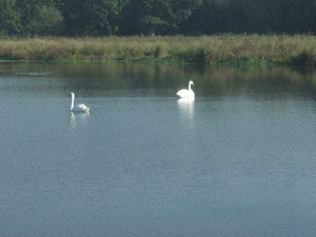 Aston wetlands