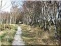 SE4599 : Arncliffe Wood : Week 40
