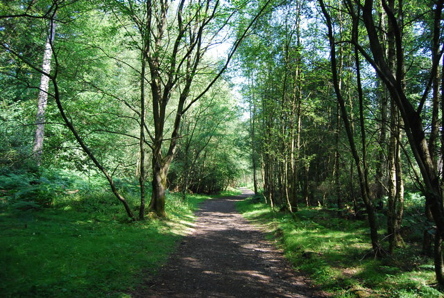 Footpath, Wotton Common