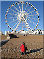 TQ3103 : Brighton Wheel : Week 40