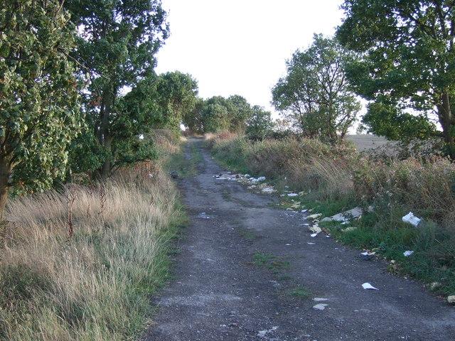 Bird Lane (track)