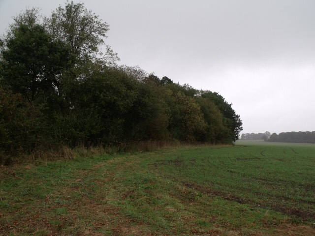 Field and the edge of Stonehills Plantation