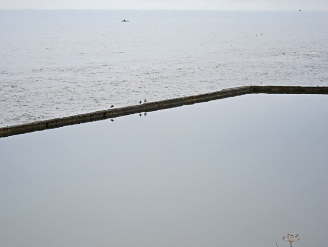 Bathing pool wall with three oystercatchers