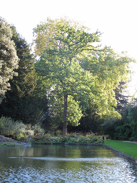 Tree at the end of the moat