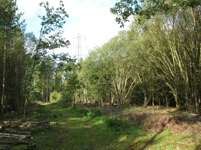 Path and pylon near Pond Wood