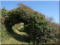 SX2954 : Arch on the coast path by Derek Harper