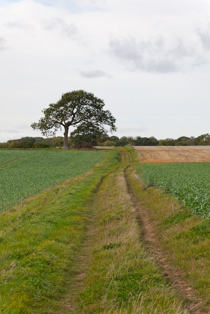 Monarch's Way crosses Roughay Farm