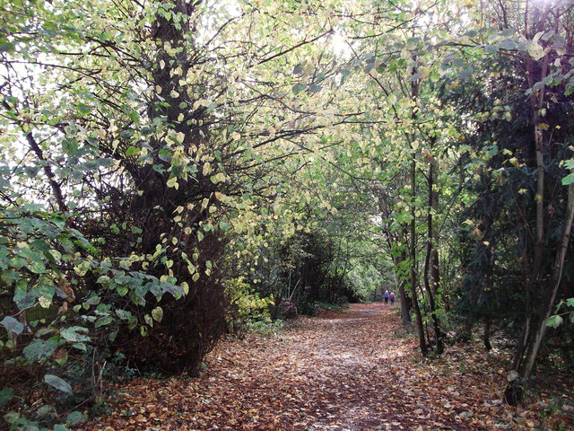 Path in West Wickham Common