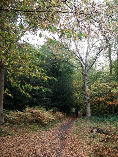 Path in West Wickham Common (2)