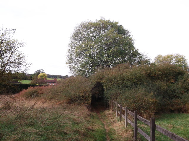 Hedge Tunnel, Keston