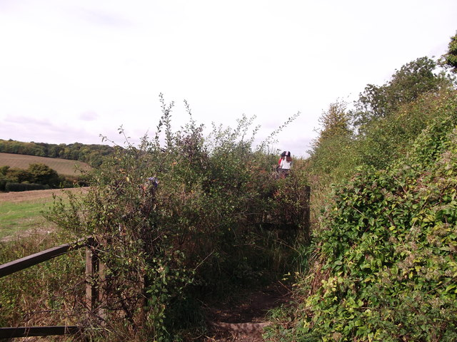 Bridleway beside Jackass Lane