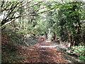 TQ4162 : Bridleway to Furze Bottom by David Anstiss