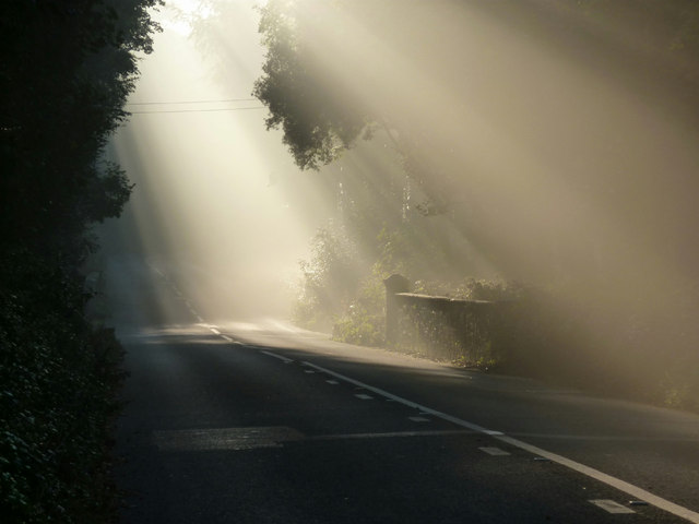 Shafts Of Sunlight Kennels Road Near 169 Tom Jolliffe Cc