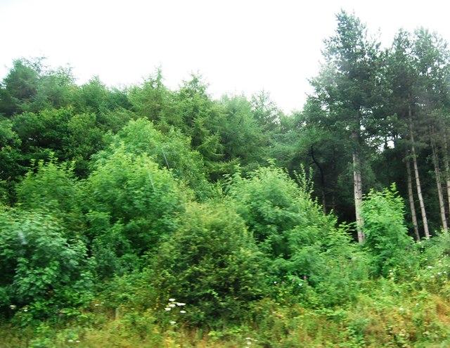 Walton's Wood