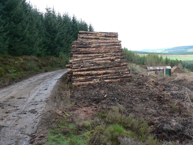 Timber stacked high waiting for extraction