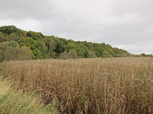 Reed bed and Paddockmuir Wood