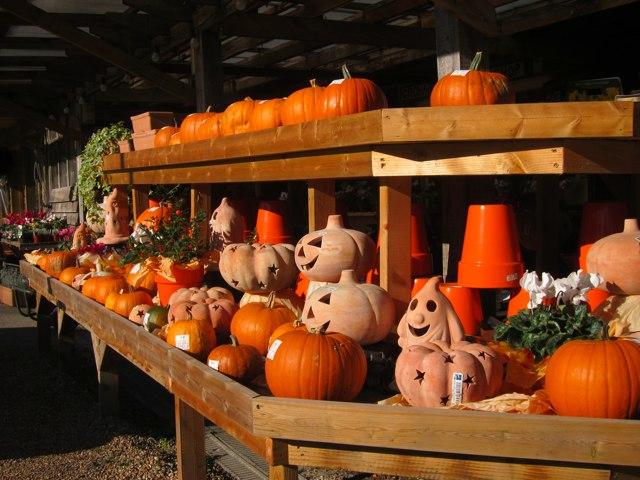 Pumpkins at Orchard Farm Shop