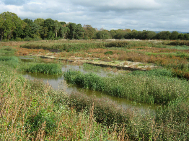 Peat bog, Westhay Moor Nature Reserve