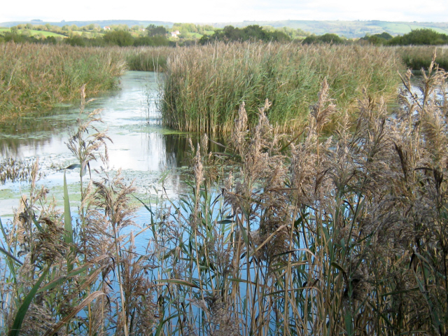 Flooded peat workings, Westhay Moor Nature Reserve