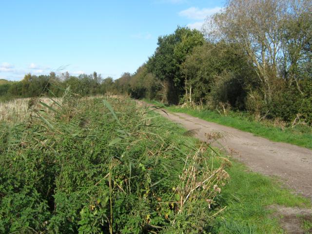 Oak's Drove, Westhay Moor