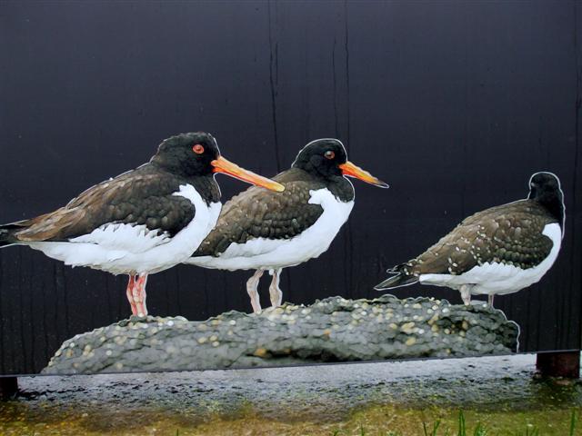 Birds, Larne