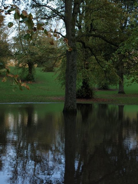 Tree in flood